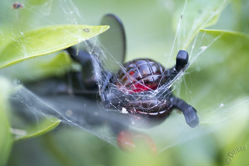 Lego fly web